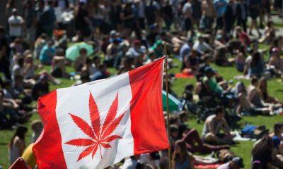 420 cannabis culture toronto