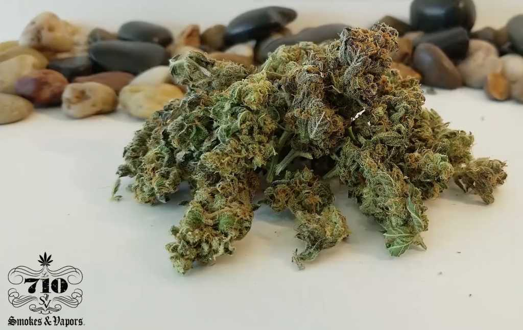 critical jack cannabis strain