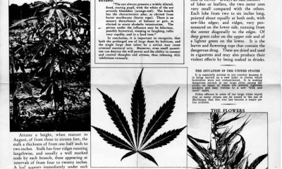 origins of the word marijuana
