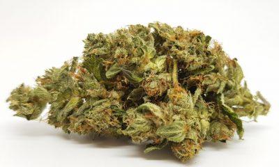 northern lights cannabis strains