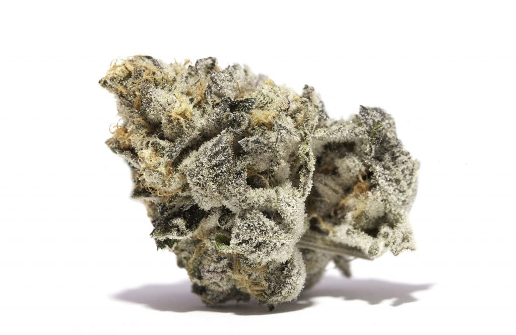 Strain of the Week: Girl Scout Cookies