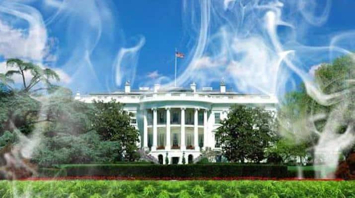 Cannabis Tourism in Washington, D.C.