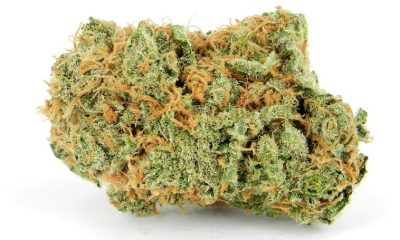 critical mass cannabis strain