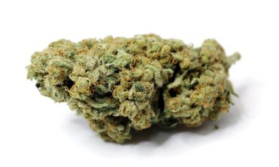 charlotte's web CBD spider BUD cannabis strain