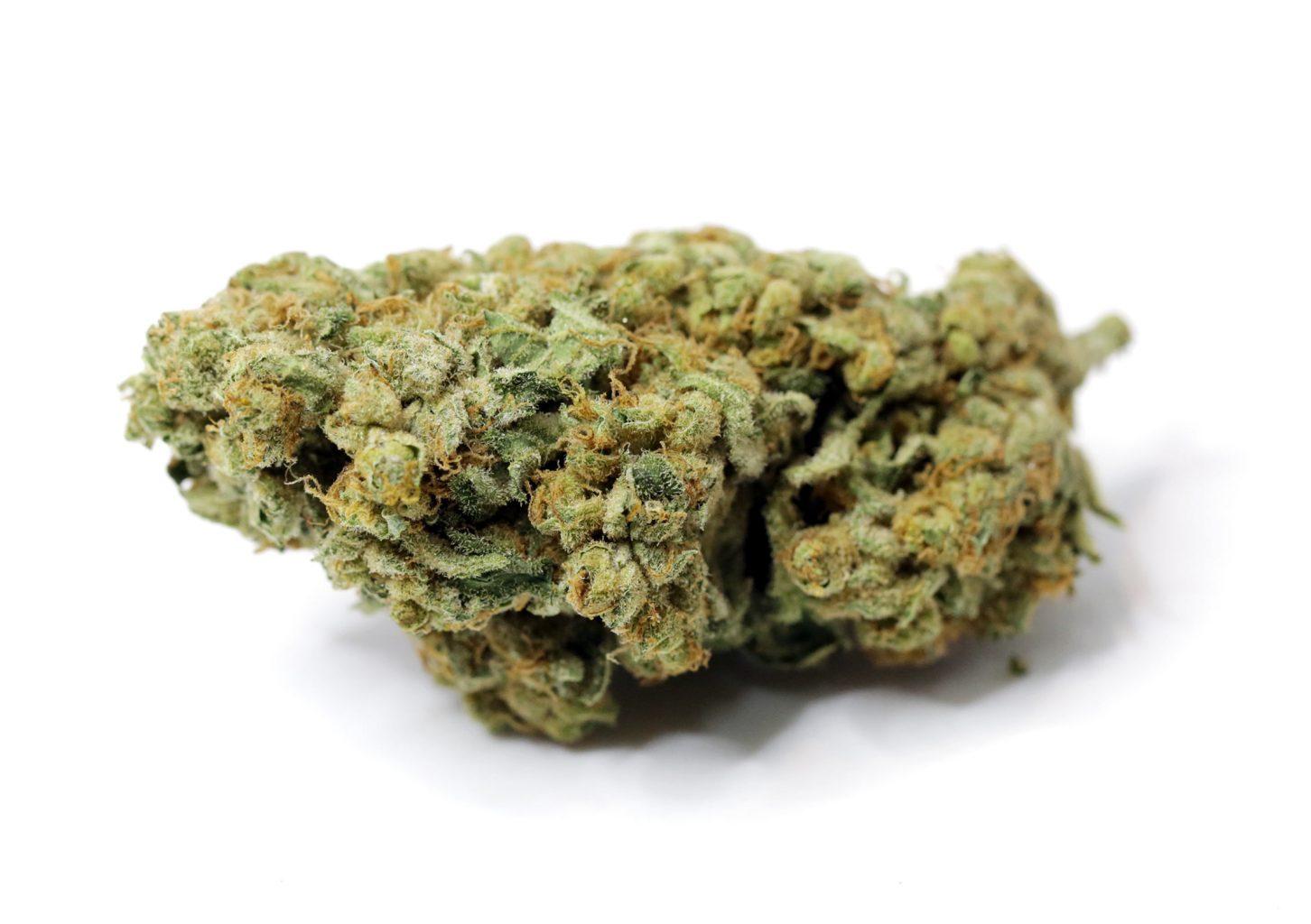 Cannabis Strain of the Week: CBD Spider Bud (Charlotte's Web)