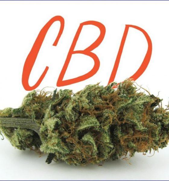 CBD Strains