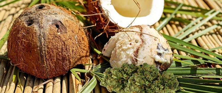 Cannabis Infused Coconut Oil — A Cooking Game-Changer!