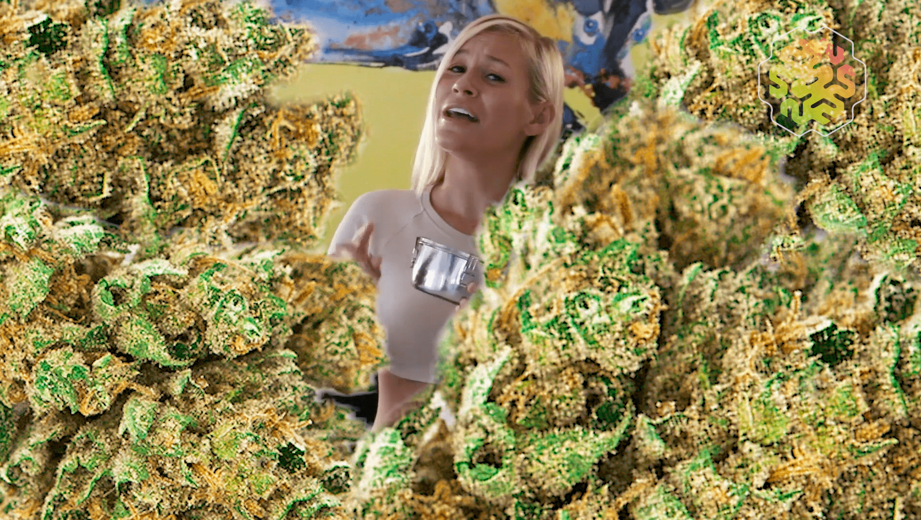 CVault how to keep your weed fresh