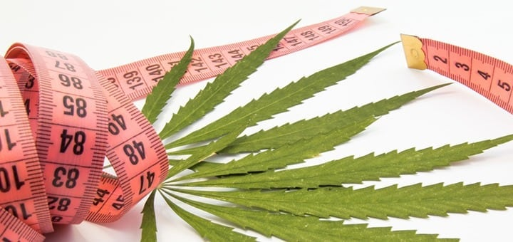 weed and weightloss diets