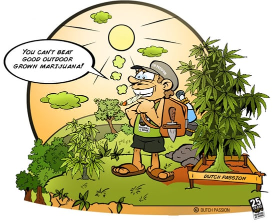 the ease of growing cannabis