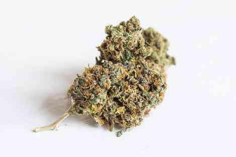 Common types of Mold on weed