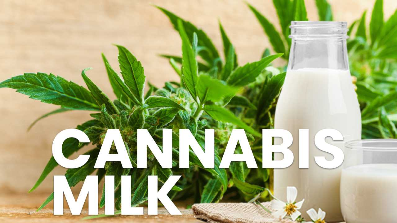 Cannamilk is Actually a Thing: Here is the Best Recipe