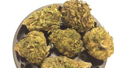 Grape OG strain