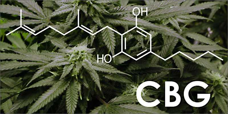 CBG Oil: Everything you need to know
