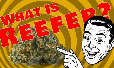 Reefer Madness Returns