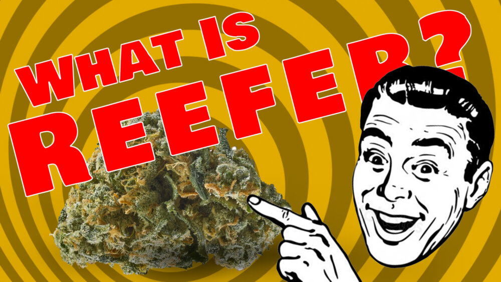 Reefer Madness Returns