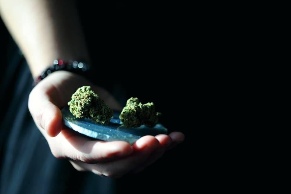 cannabis buds on a hand