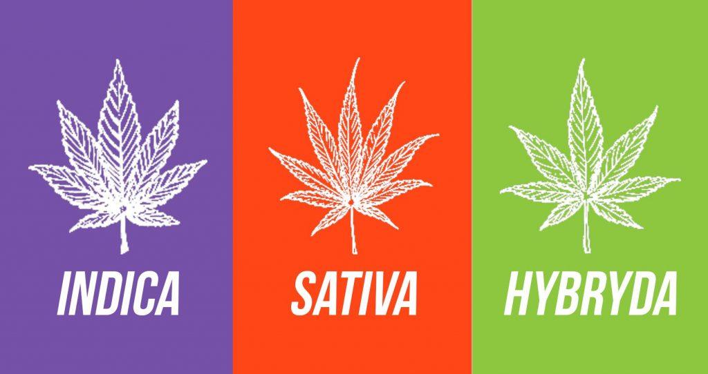 Reefer Madness Marijuana Propaganda