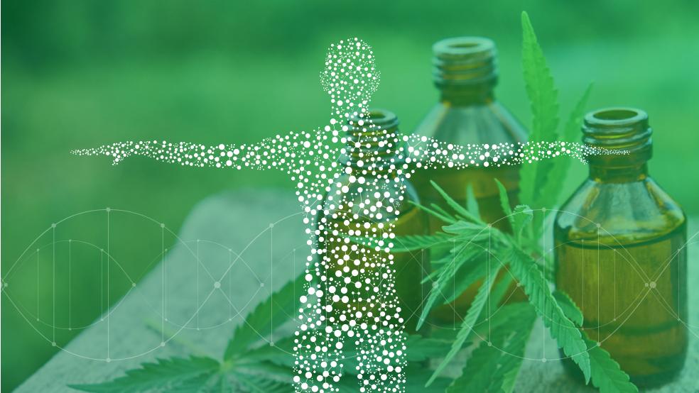 Endocannabinoid system regulation is essential for good health