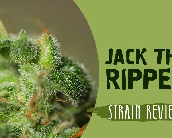 Jack the Ripper strain
