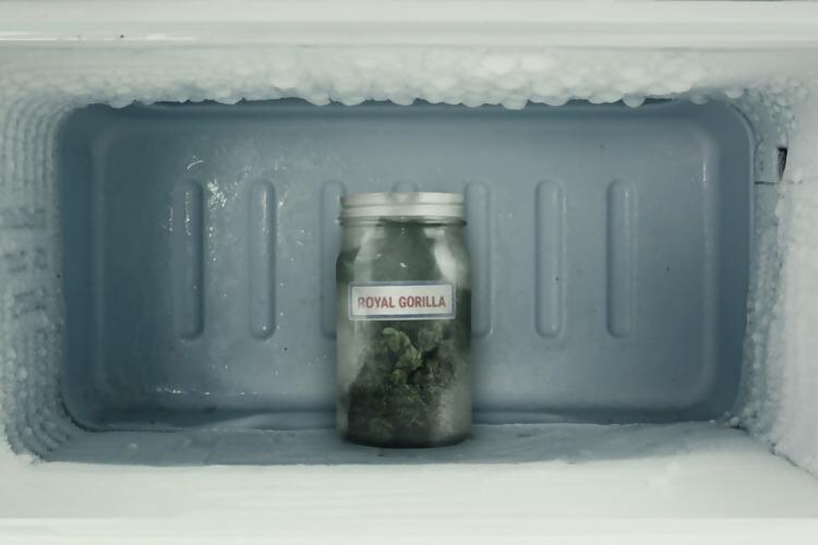 Storing hash in the freezer
