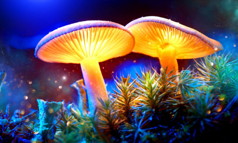 My Experiences With Shrooms: Epiphanies, Trips and Tears