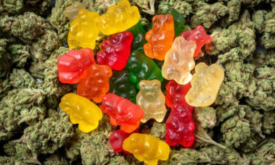 On Thursday, October 17th, 2019, the Canadian government officially legalized cannabis edibles, topicals, and extracts.